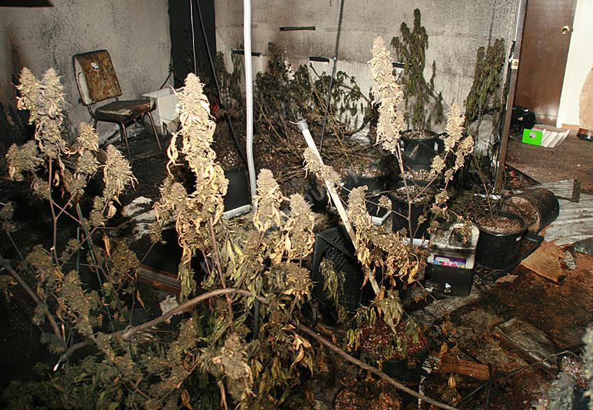 Even Medical Pot cultivation can start house fires